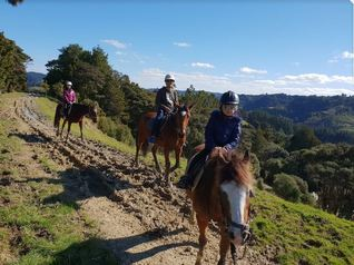 horse riding trekking auckland nz Picture