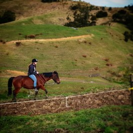 horse trekking and riding auckland Picture