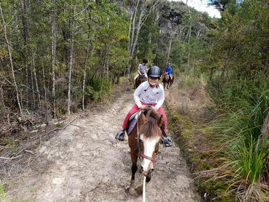 horse riding and trekking auckland NZPicture
