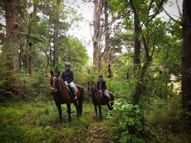 Horse trekking riding auckland NZ Picture