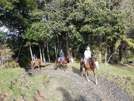 horse riding trekking auckland nz all abilitiesPicture