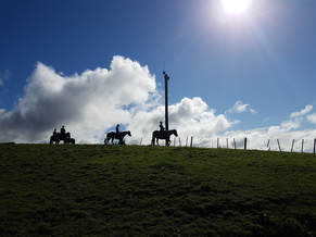 Horse riding trekking auckland Picture