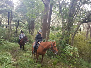Horse riding and trekking through bush Picture